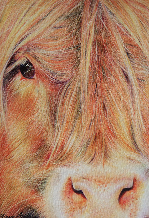 elaine-anderson-art-cow